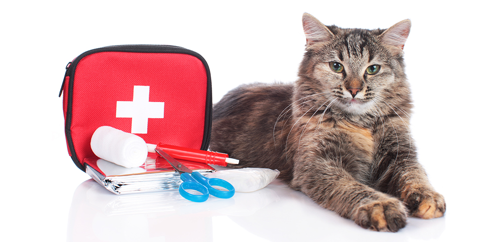 Disaster Prep Kits: What You Need to Keep Your Pets Safe