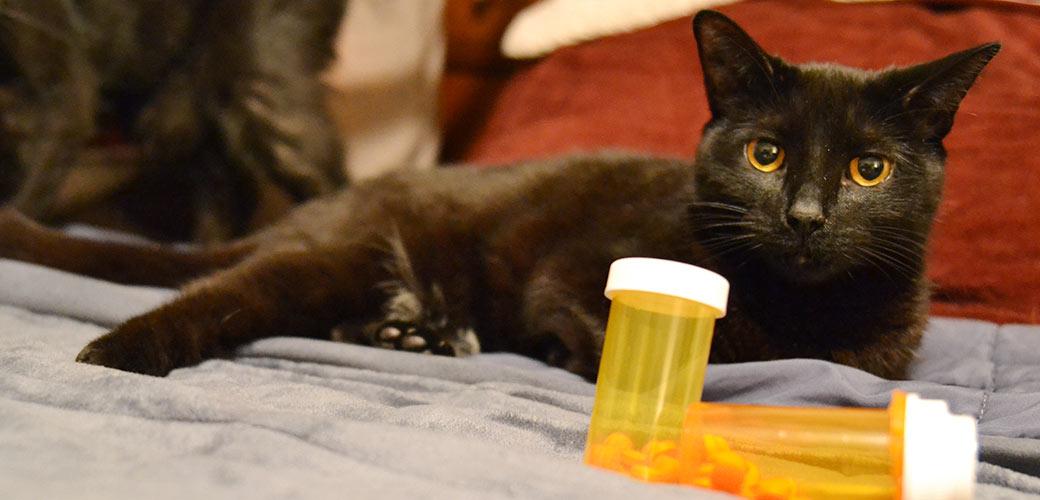 a cat near prescription bottles