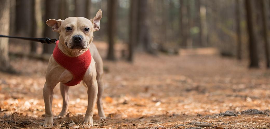 a dog walking in dead leaves