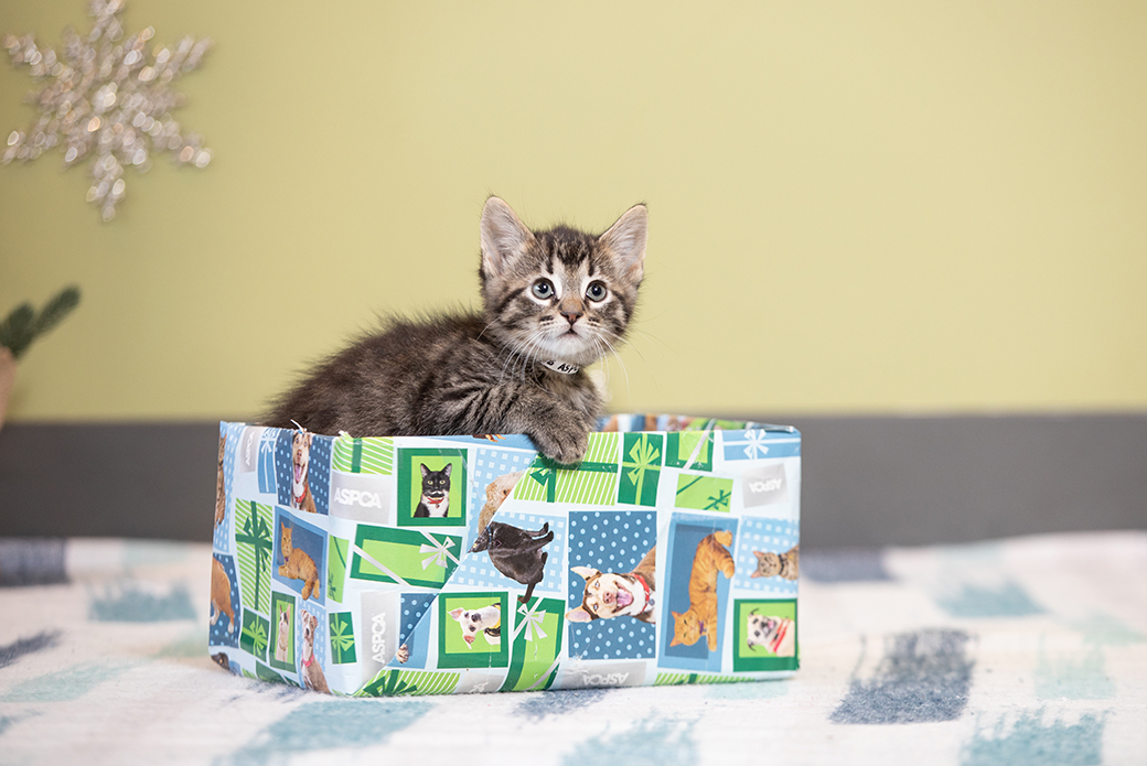 a kitten in a gift box