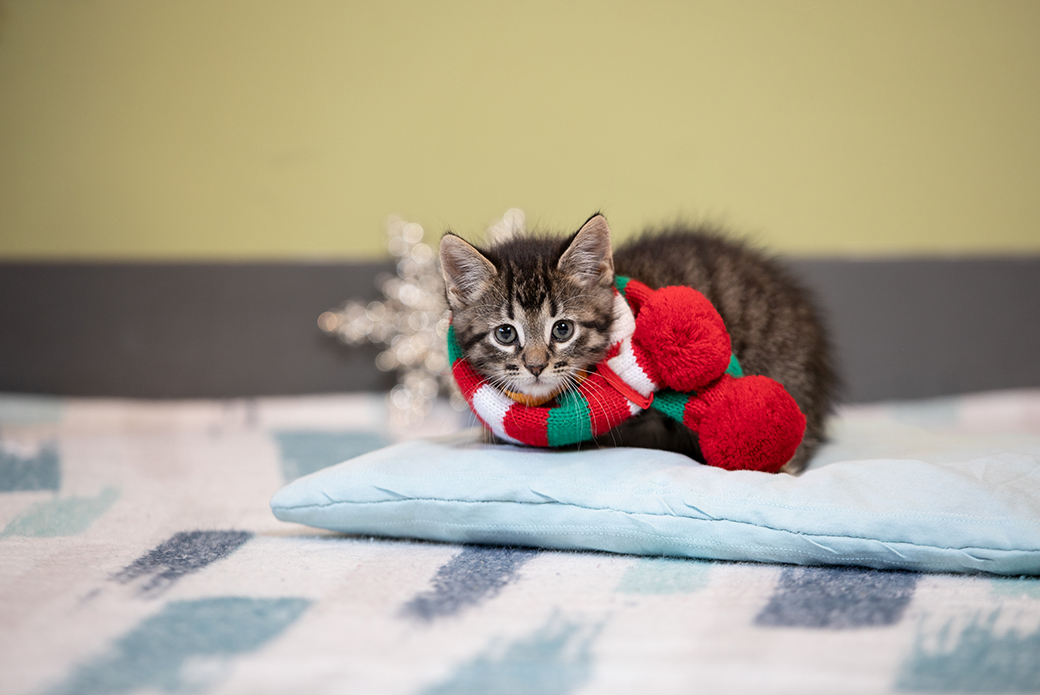 kittens in a scarf