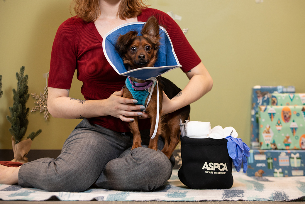 a dog with a cone being held