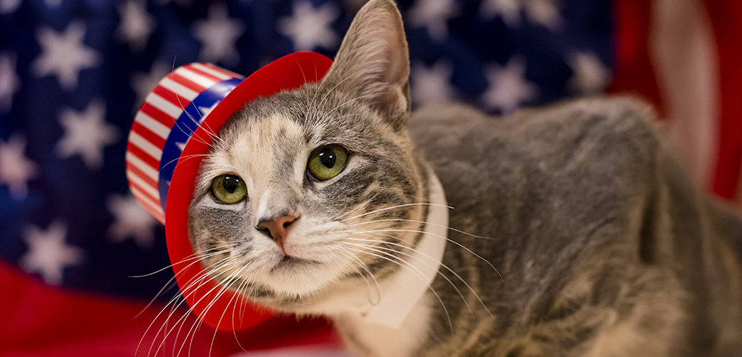 a cat with an american flag hat