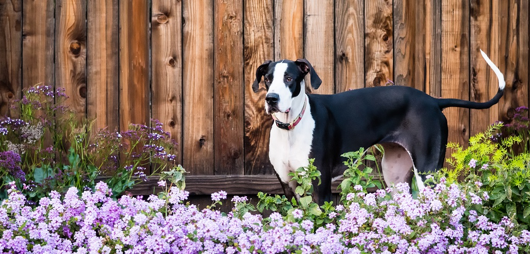 a dog in a flower garden