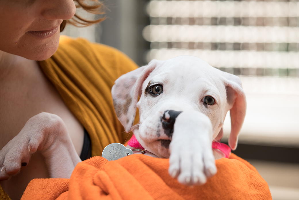 a woman holding a puppy in a towel