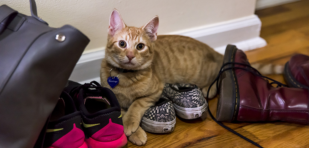 a cat on shoes