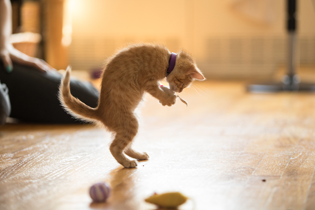 a kitten playing