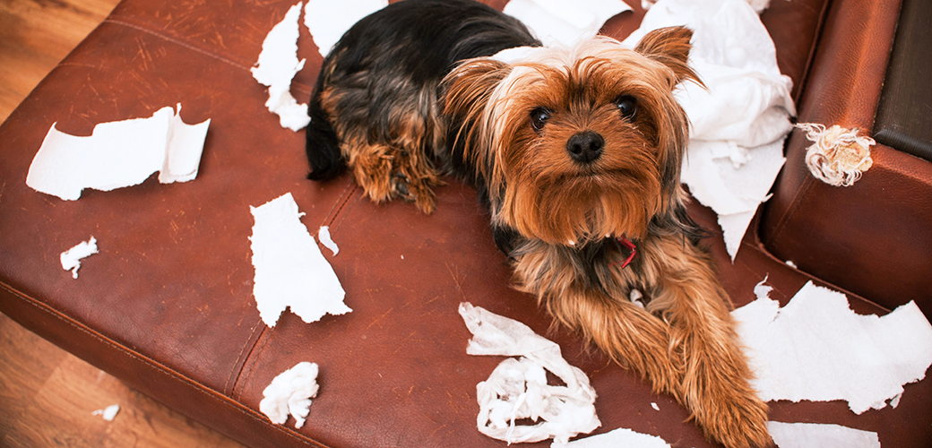 a dog with torn up paper