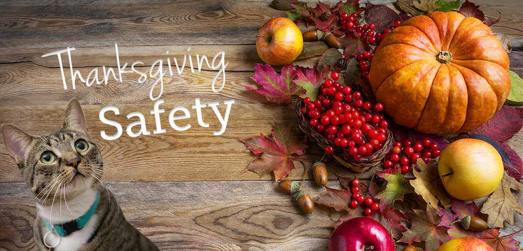 APCC: Thanksgiving