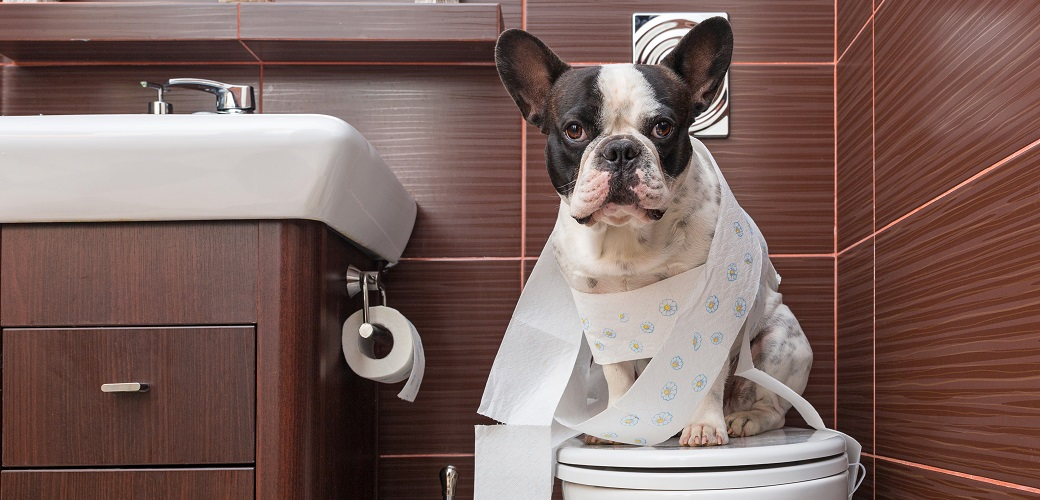 A dog wrapped up in toilet paper