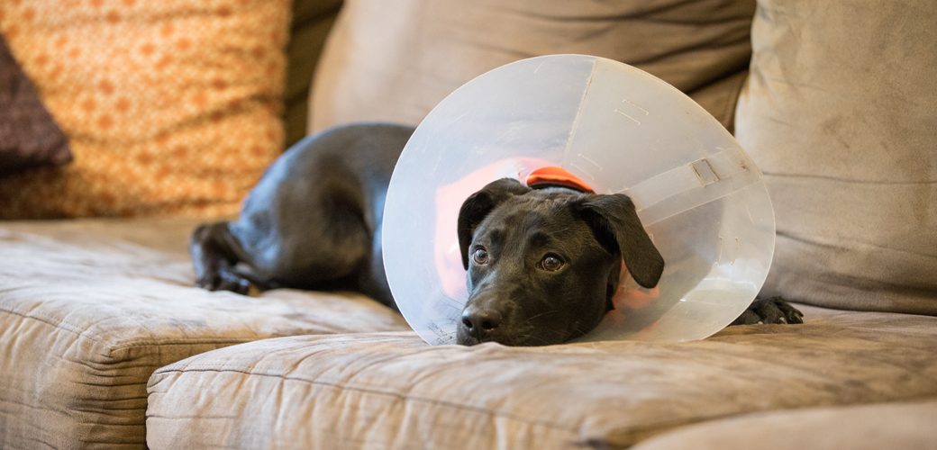 a dog in a cone collar