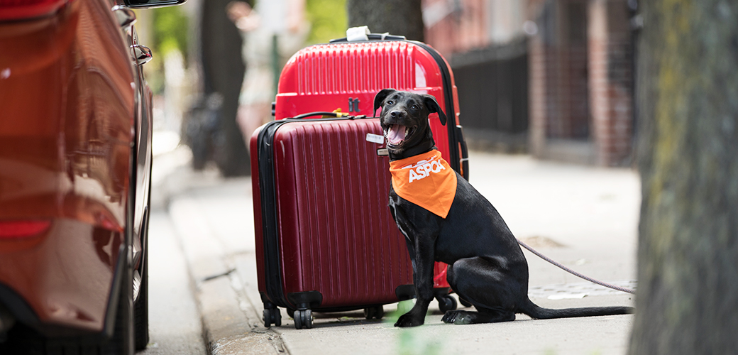 a dog near suitcases