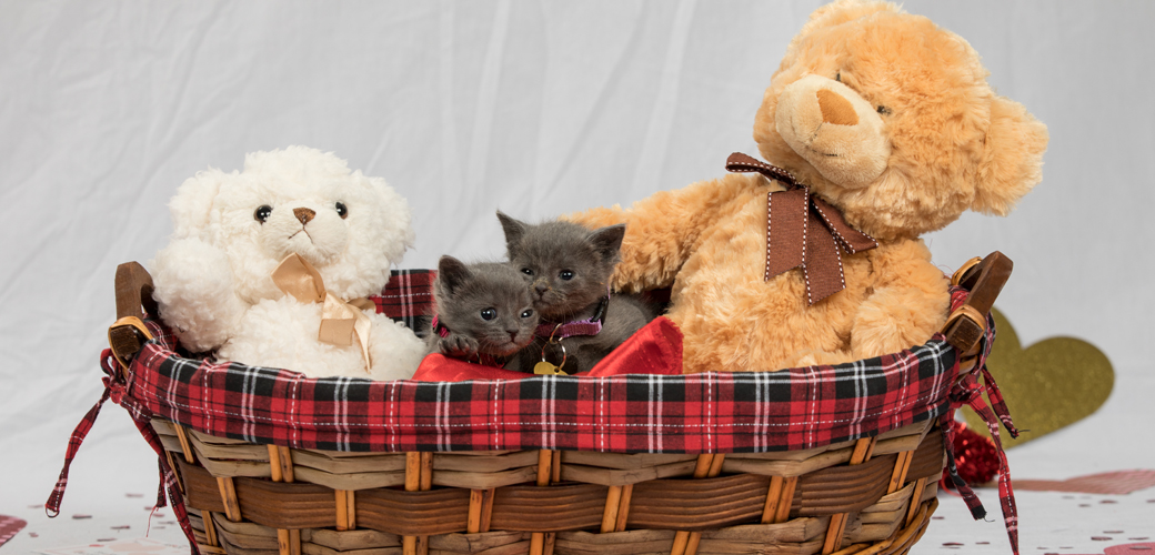 two kittens in a basket with two valetines day stuffed bears