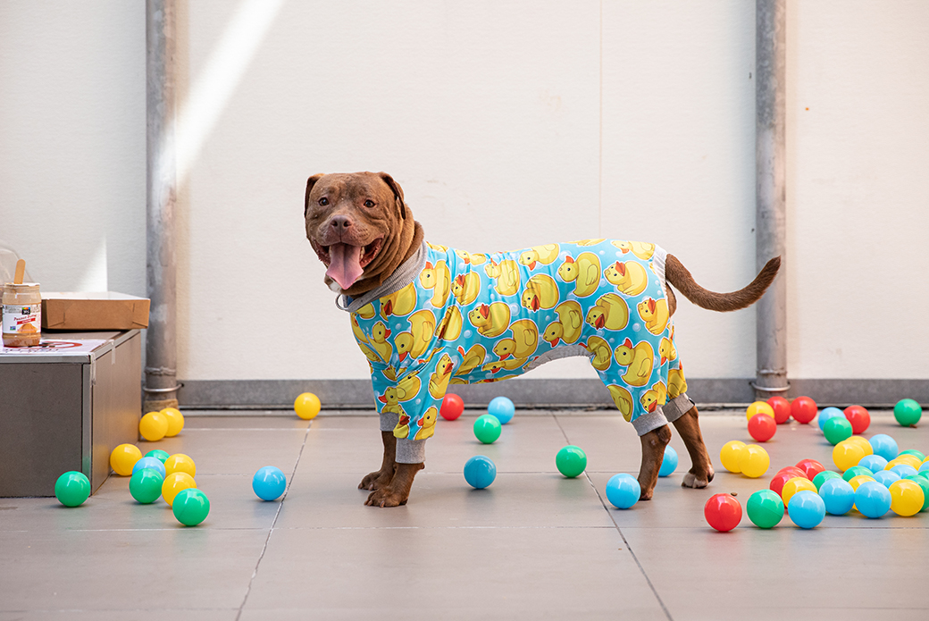 Apple in pajamas with multi color balls around her