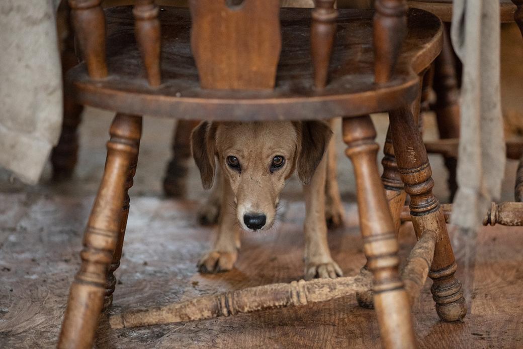 a dog hiding under a chair