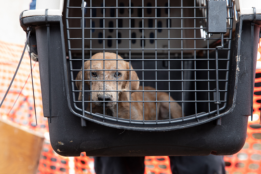 a rescued dog in a carrier