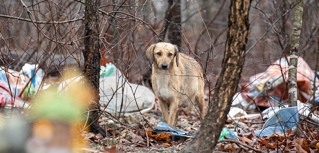 a dog around trash in the woods