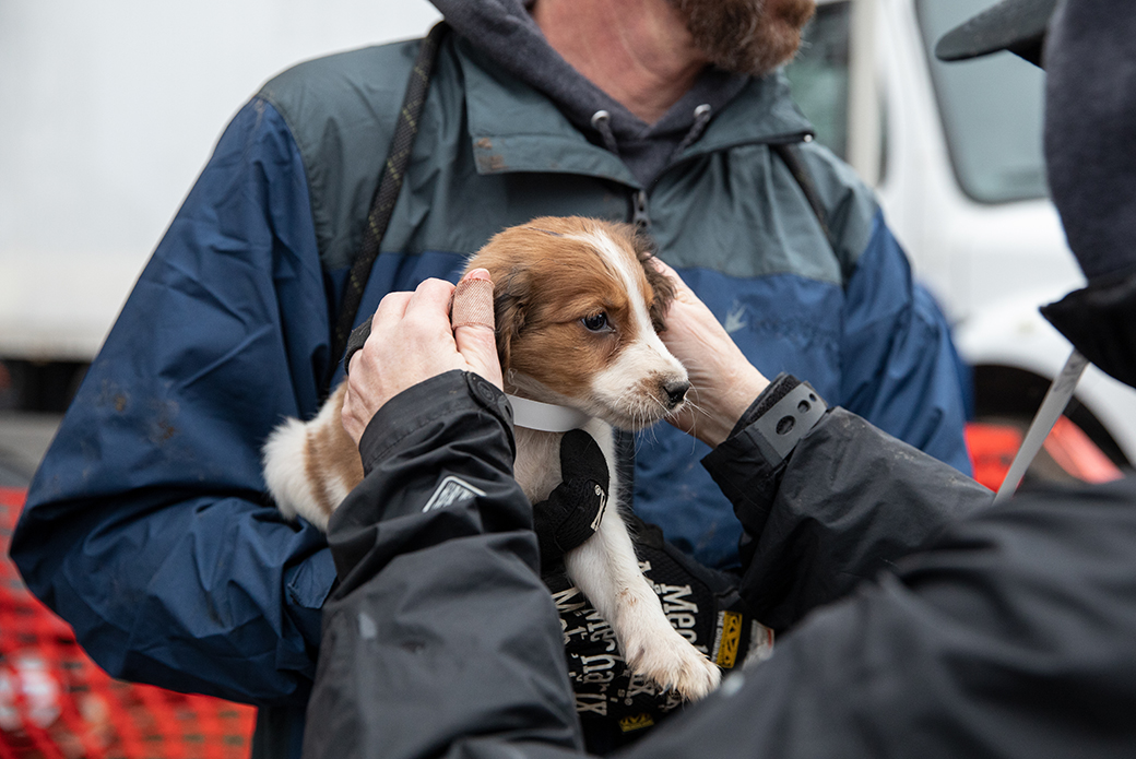 a rescued puppy