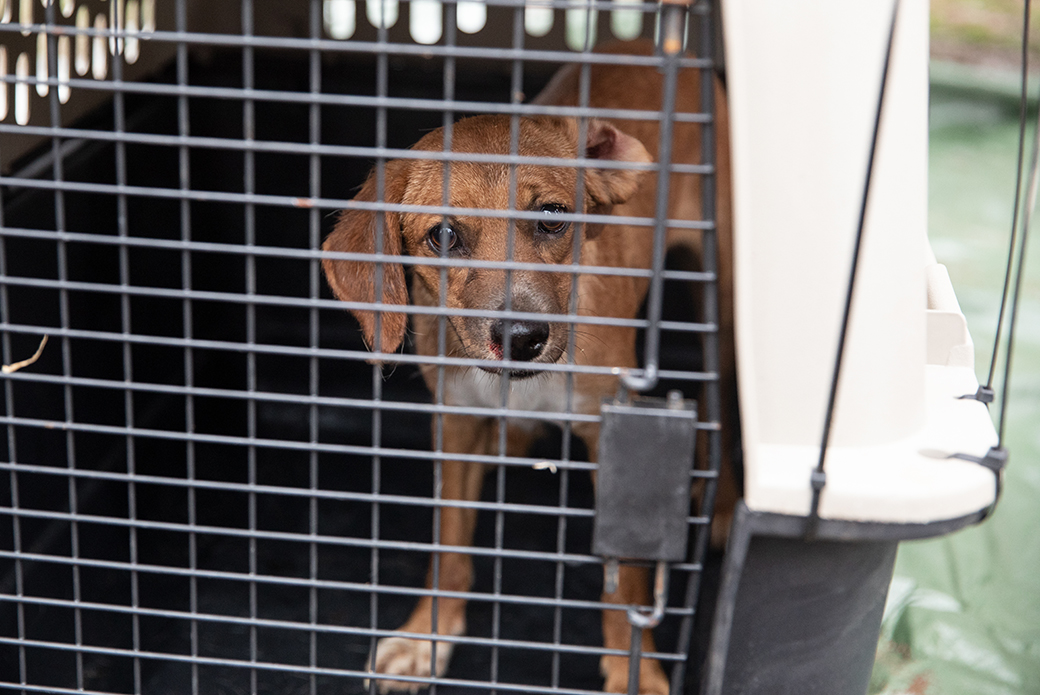 rescued dog in a carrier