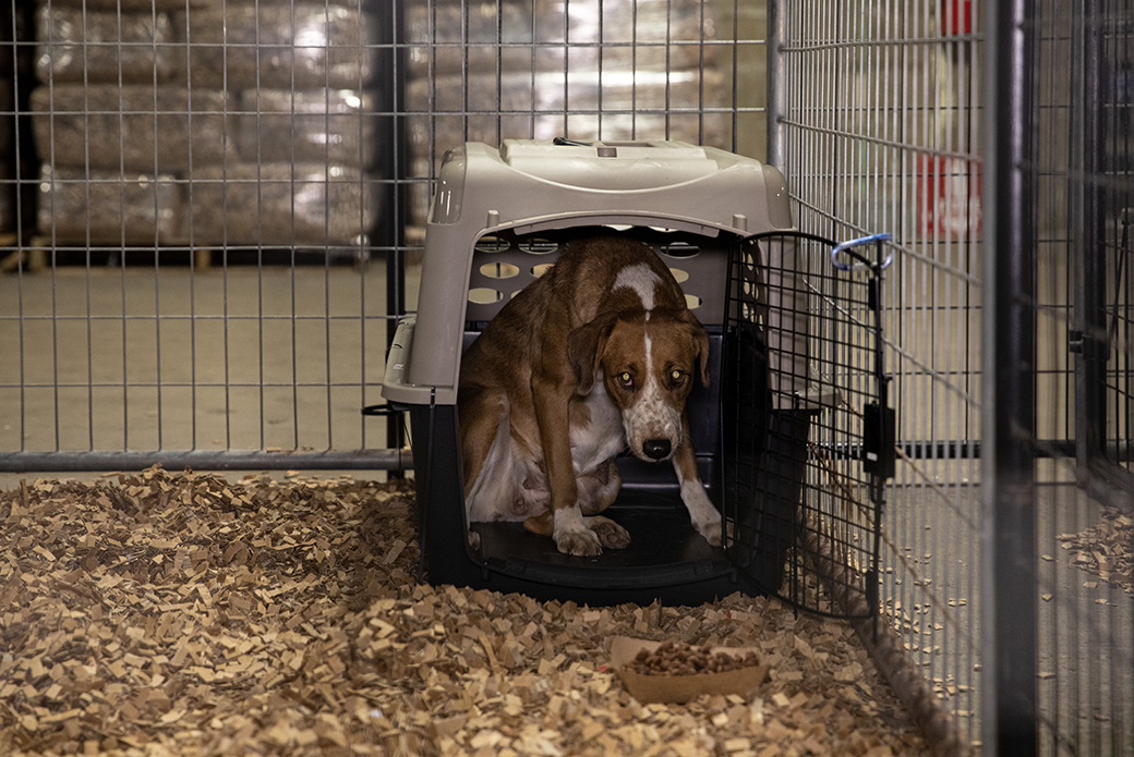 scared dog at the emergency shelter