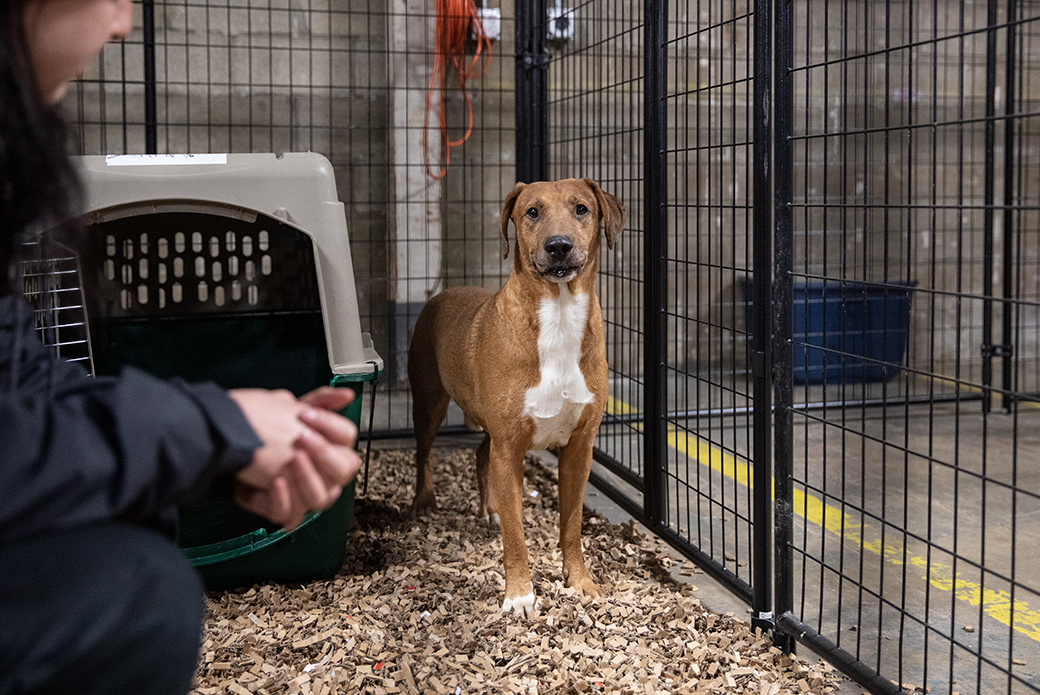 a rescued dog at the emergency shelter
