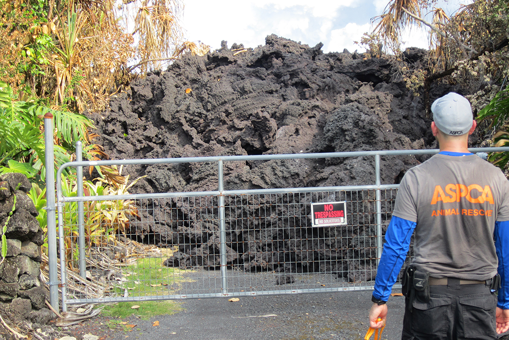 an aspca responder in front of cooled lava
