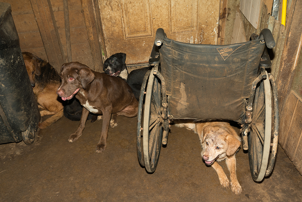 Dogs at HEAR kept in a dirty room We are suppose to save these animals not put them in worse conditions