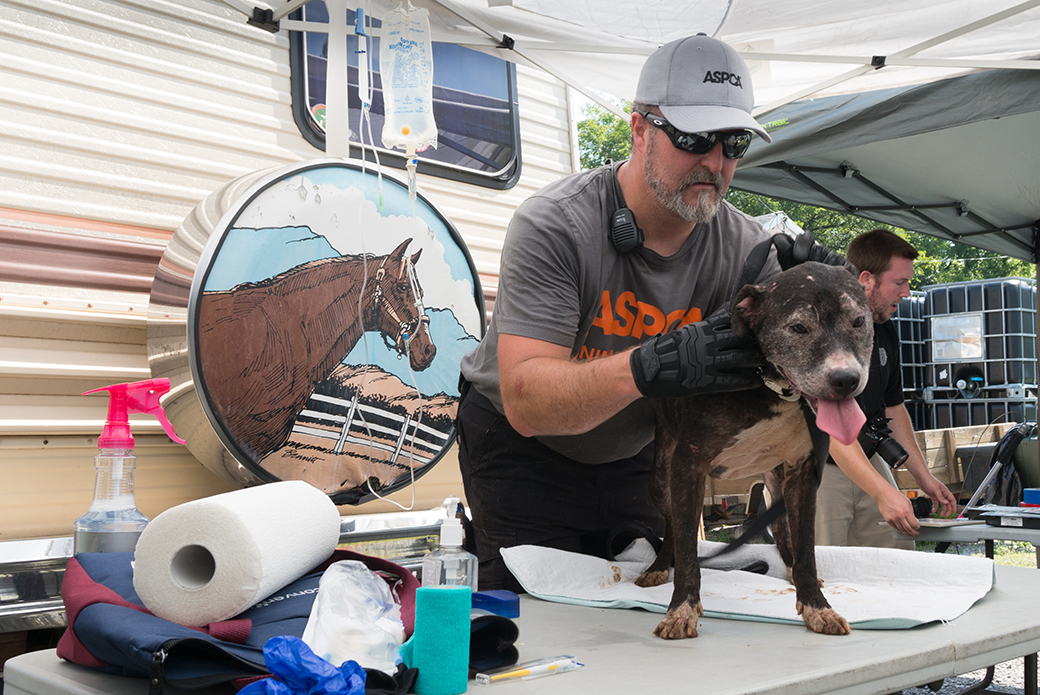 Breaking Aspca Assists In Removal Of 41 Dogs From Happy