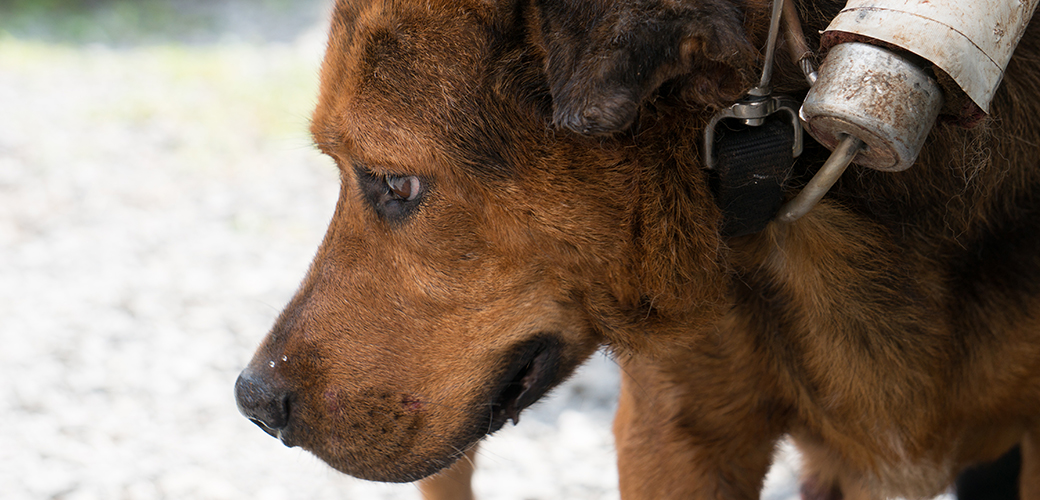 ASPCA assists in removal of dogs from HEAR
