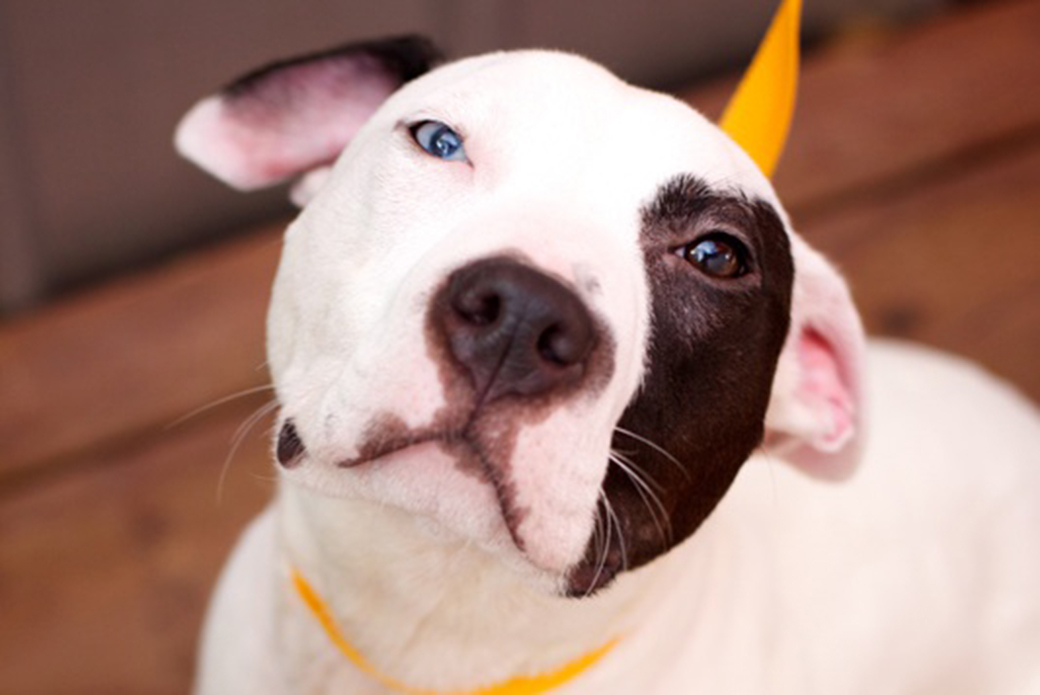 ASPCA Happy Tails: Blue's Story