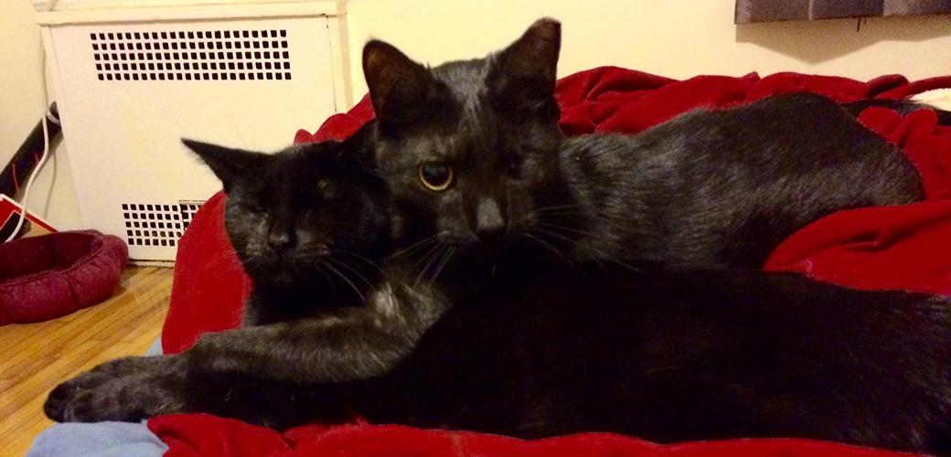 ASPCA Happy Tails: Frankie & Zuzu