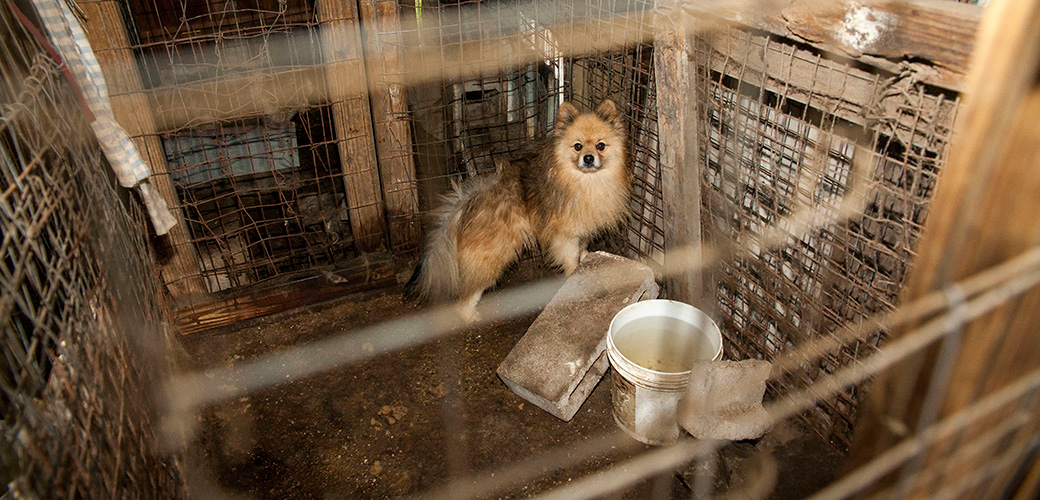 Puppy Mills Dogs Abused For The Pet Trade