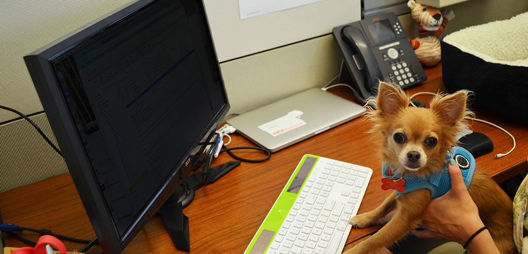 Attention Pet Parents: Tomorrow Is Take Your Dog to Work Day!