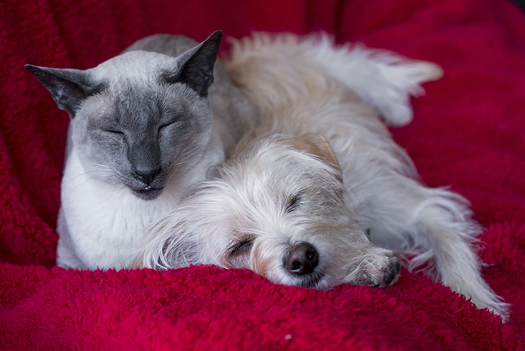 a cat and a dog snuggling