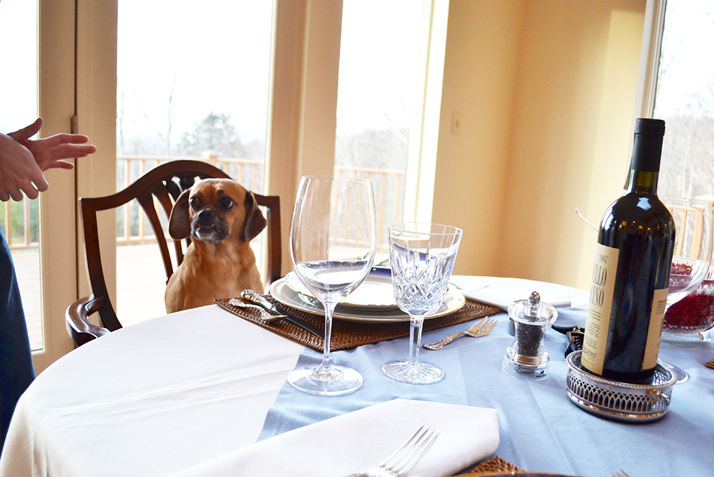 a puggle at a table