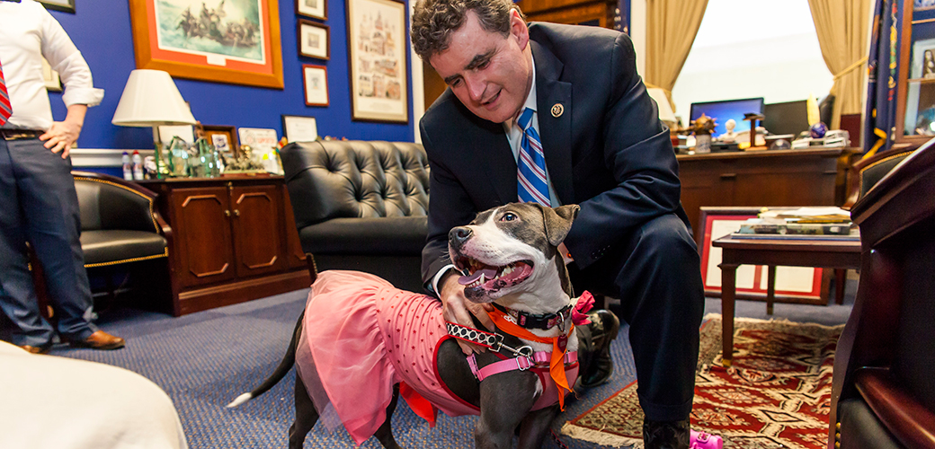 Bam Bam Goes to Washington on Behalf of Animal Fighting Victims