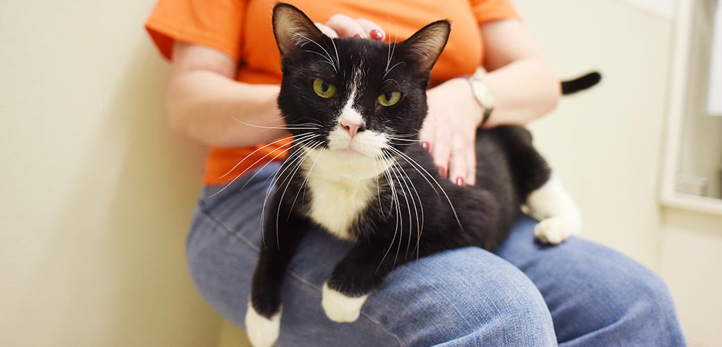 Celebrate Black Cat Appreciation Day on August 17!