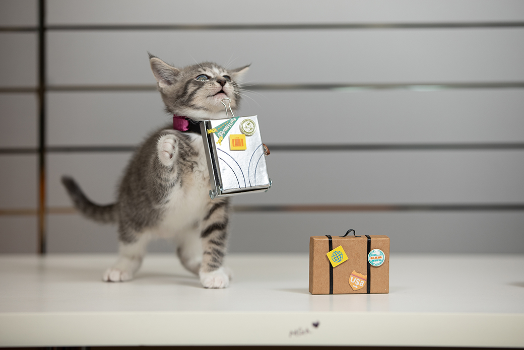 a kitten with a tiny suitcase