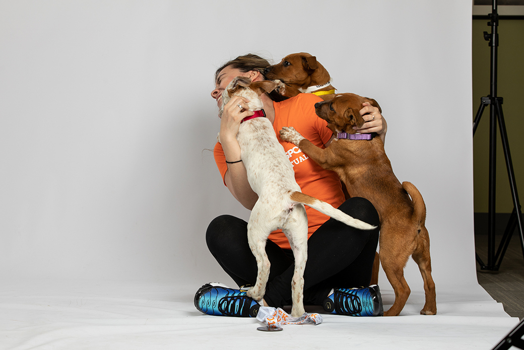 three dogs climbing on a woman to lick her face
