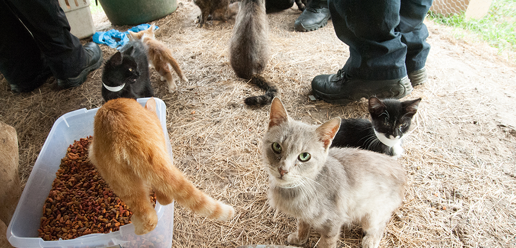 cats at a failed sanctuary