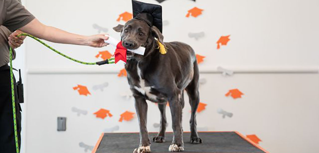 Roux holding her diploma in her mouth