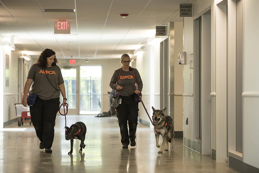 animal behavior experts walking dogs through the BRC halls