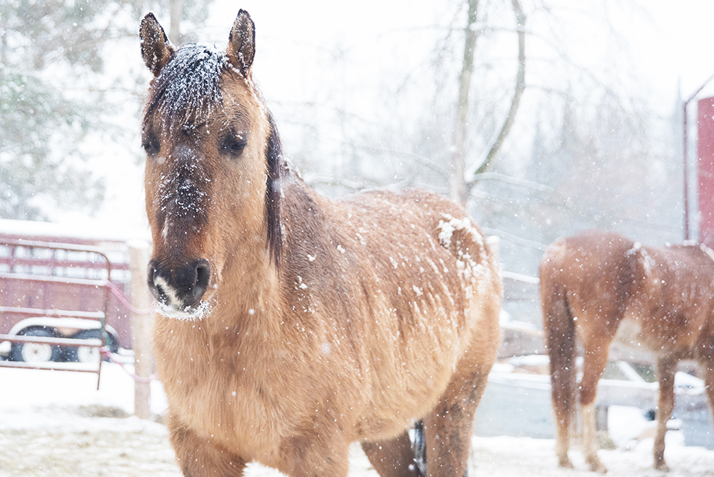 Horse caught in the snow