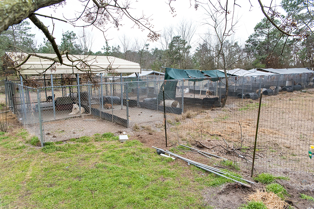 BREAKING: ASPCA Assists in the Rescue of Nearly 600 Animals from Neglect at Unlicensed NC Facility