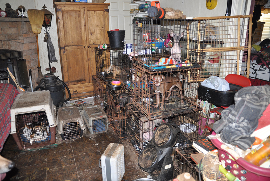 overcrowded home in Bell, Fla
