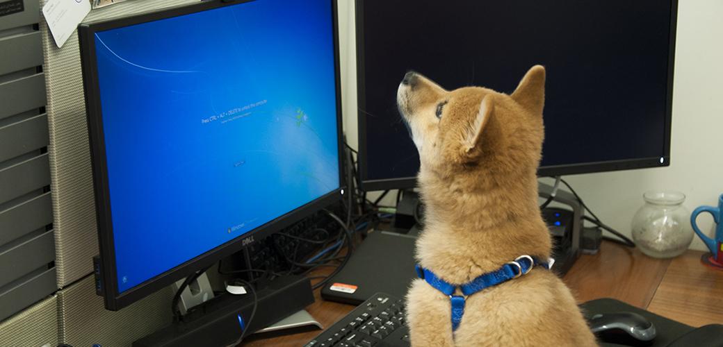 a dog looking at a computer screen
