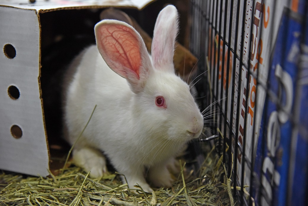Bunny set to be adopted