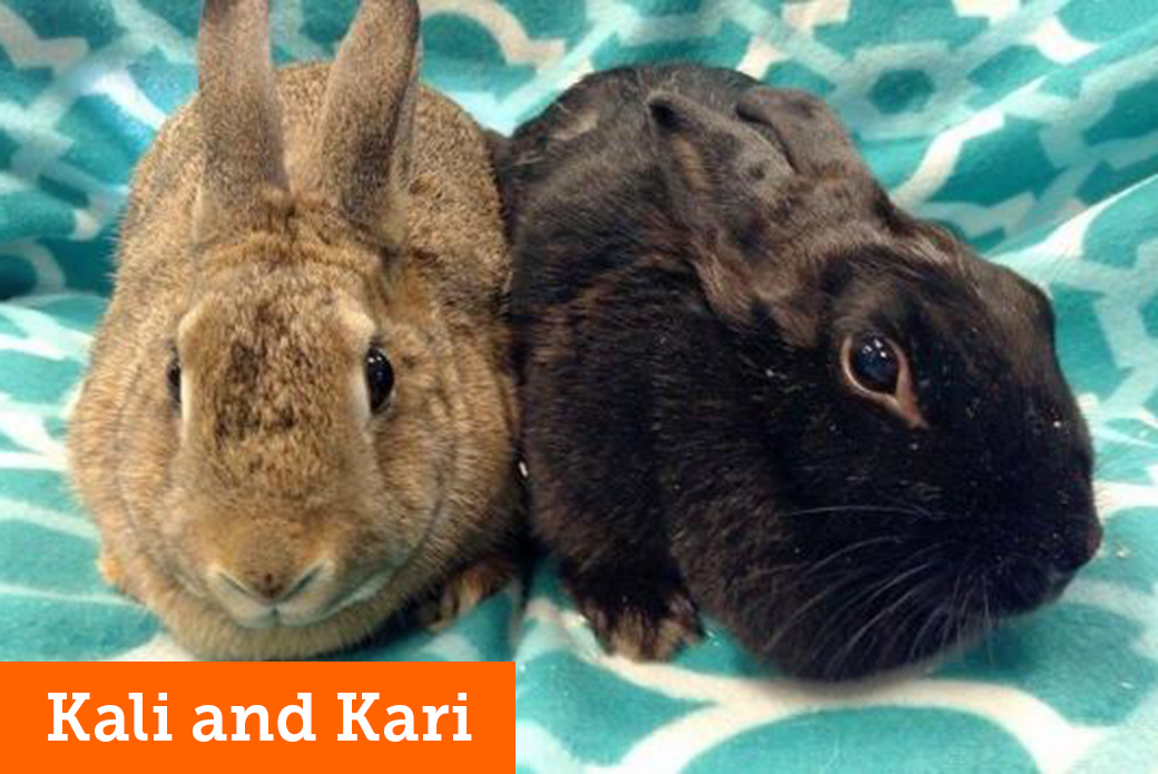 Are You Considering Bringing Home a Furry Friend? Adopt a Bunny at Our NYC Rabbit Adoption Event This Saturday!