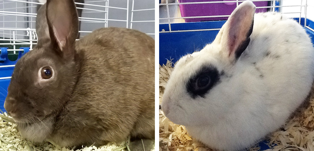Brooklyn Bunnies Available for Adoption at St. Hubert's Animal Welfare Center