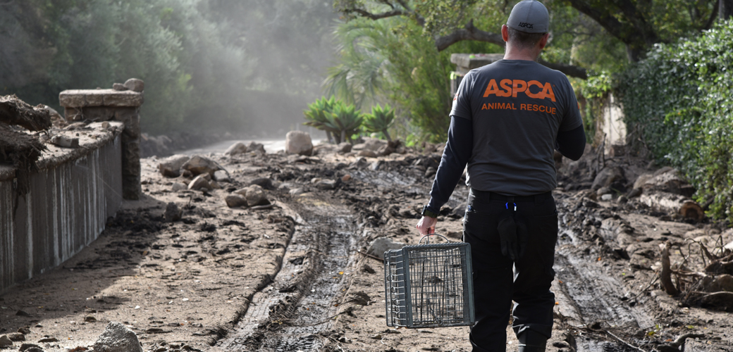 ASPCA volunteer carrying a cage